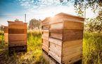 Prima recoltă de miere din 2018 pentru Porsche: constructorul are 3 milioane de albine în Leipzig și vinde mierea colectată în Germania