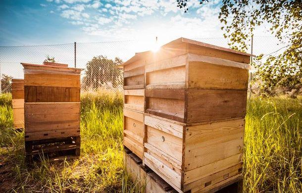 Prima recoltă de miere din 2018 pentru Porsche: constructorul are 3 milioane de albine în Leipzig și vinde mierea colectată în Germania - Poza 1