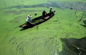 Cercetatorii germani vor sa scoata hidrogen din alge