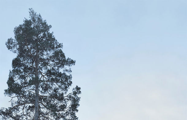 Aventură în ADN: la plimbare cu noul Volvo V90 Cross Country prin Suedia - Poza 25