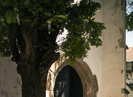 Un german în Transilvania: biserici cu ziduri de apărare înalte de 12 metri, un castel părăsit și idilicul Viscri - Poza 14