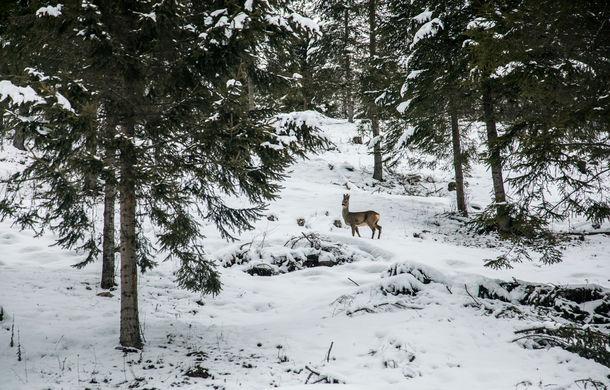 Cu noul Duster în creierii munților: blestemul navigației, pierduți prin zăpadă și căldura de la Casa Răzeșilor - Poza 56