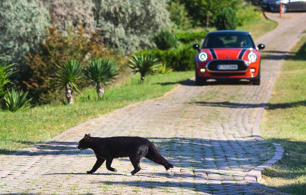 6 ore de fotografie auto: cu Mini și BMW în fața cursanților Festivalului Internațional de Arte Vizuale - Poza 61