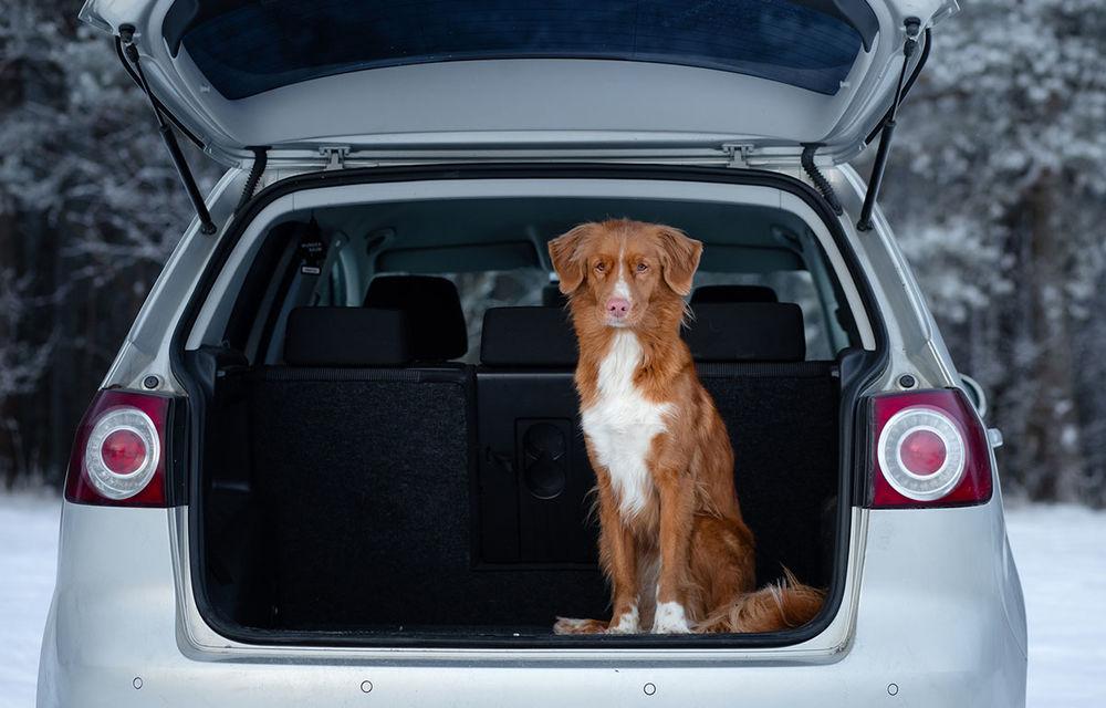 """Câinii, """"medicament"""" pentru șoferi: peste 50% dintre conducătorii auto merg mai prudent cu un câine în mașină - Poza 1"""