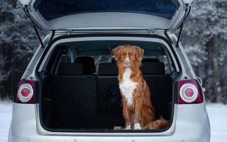 """Câinii, """"medicament"""" pentru șoferi: peste 50% dintre conducătorii auto merg mai prudent cu un câine în mașină"""