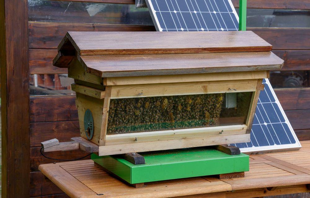 Ce legătură există între Lamborghini și o colonie de 600.000 de albine? - Poza 5