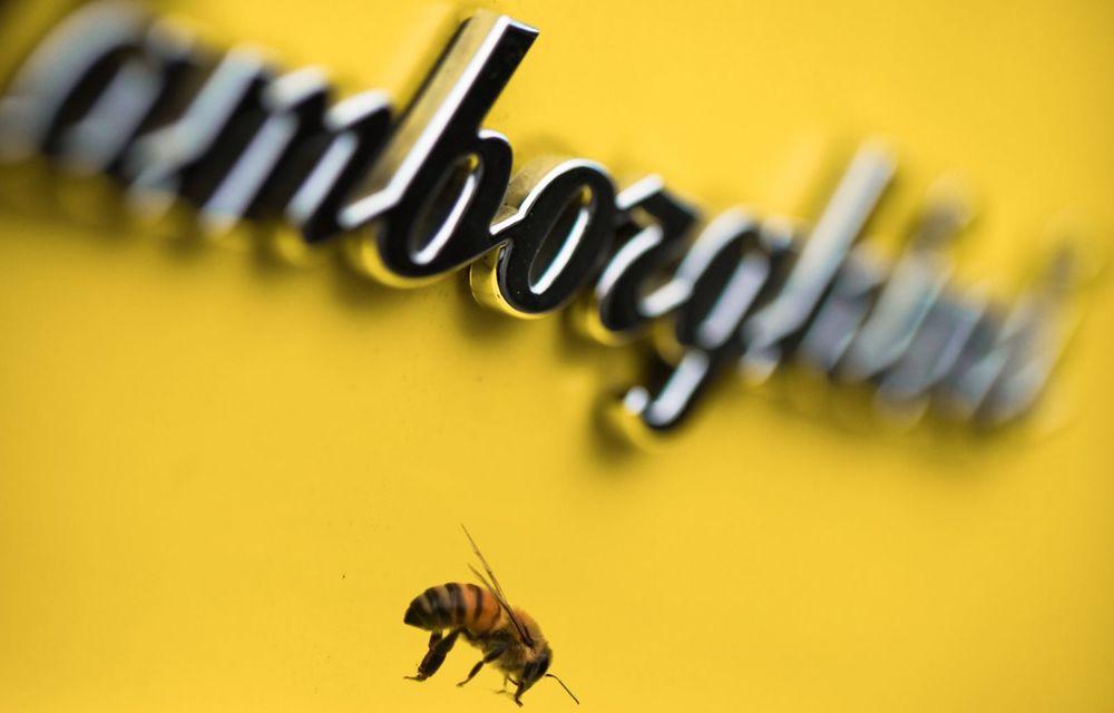 Ce legătură există între Lamborghini și o colonie de 600.000 de albine? - Poza 1
