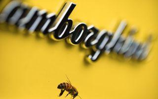 Ce legătură există între Lamborghini și o colonie de 600.000 de albine?