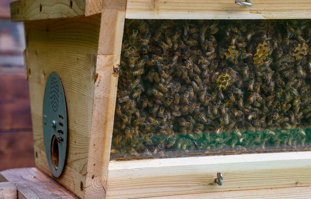 Ce legătură există între Lamborghini și o colonie de 600.000 de albine? - Poza 8