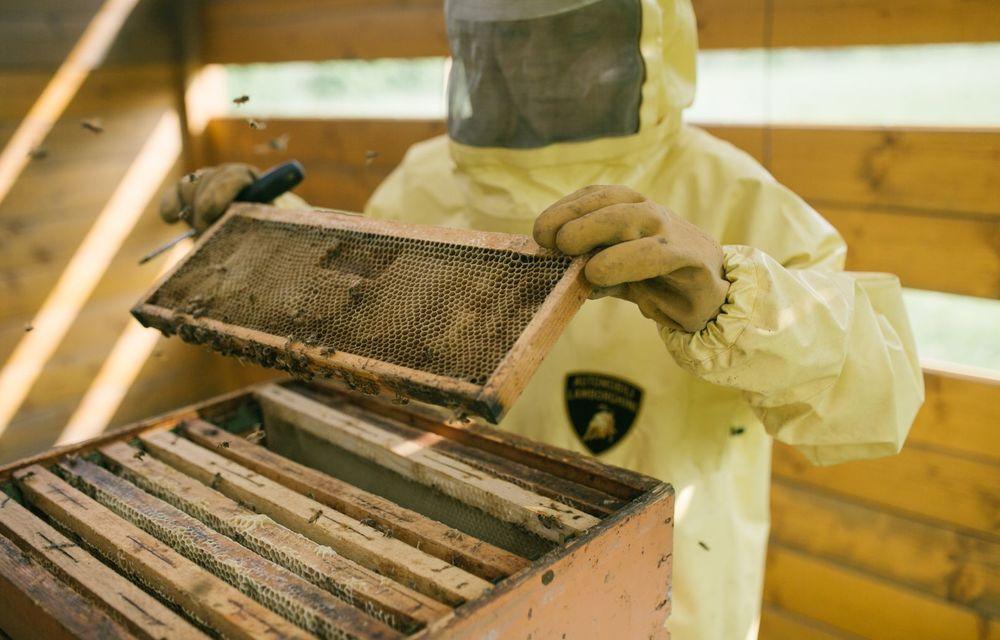 Ce legătură există între Lamborghini și o colonie de 600.000 de albine? - Poza 3