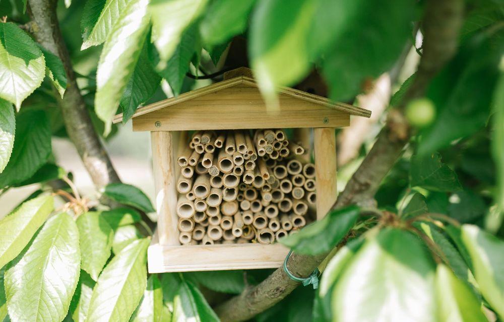 Ce legătură există între Lamborghini și o colonie de 600.000 de albine? - Poza 7