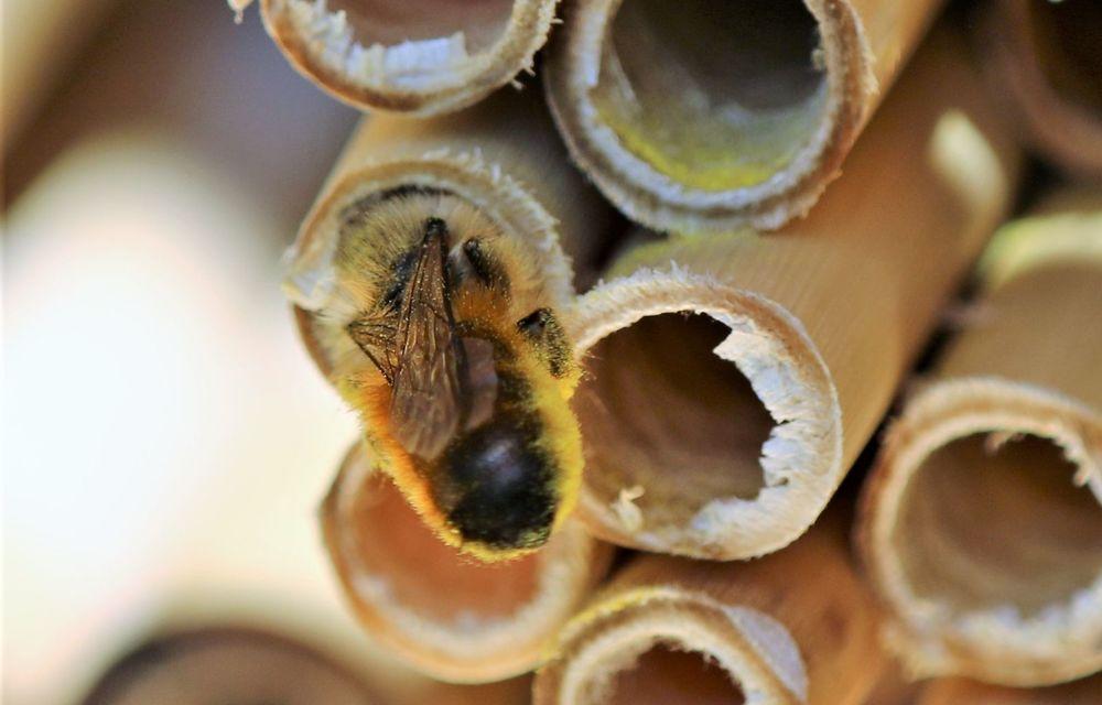 Ce legătură există între Lamborghini și o colonie de 600.000 de albine? - Poza 10
