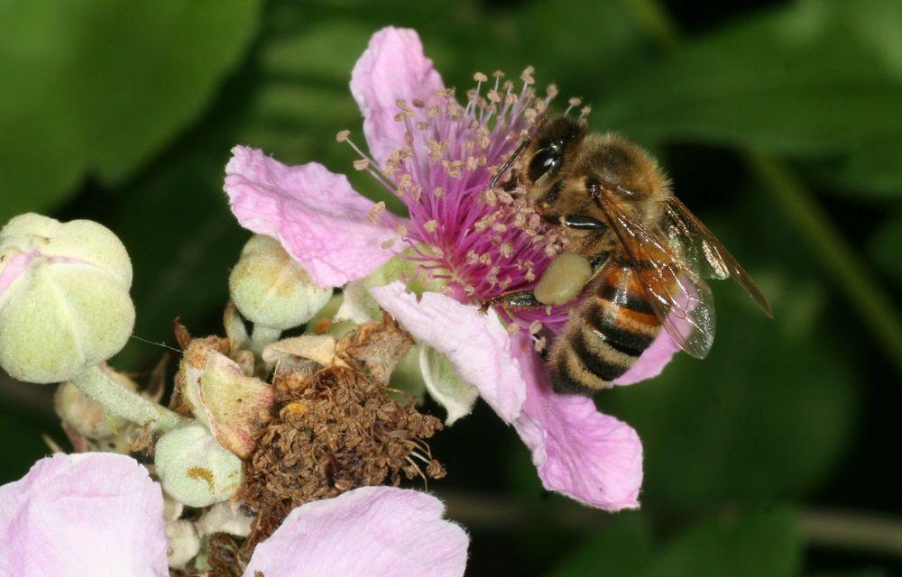 Ce legătură există între Lamborghini și o colonie de 600.000 de albine? - Poza 12