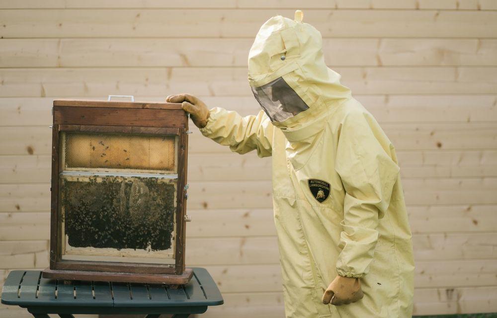 Ce legătură există între Lamborghini și o colonie de 600.000 de albine? - Poza 2