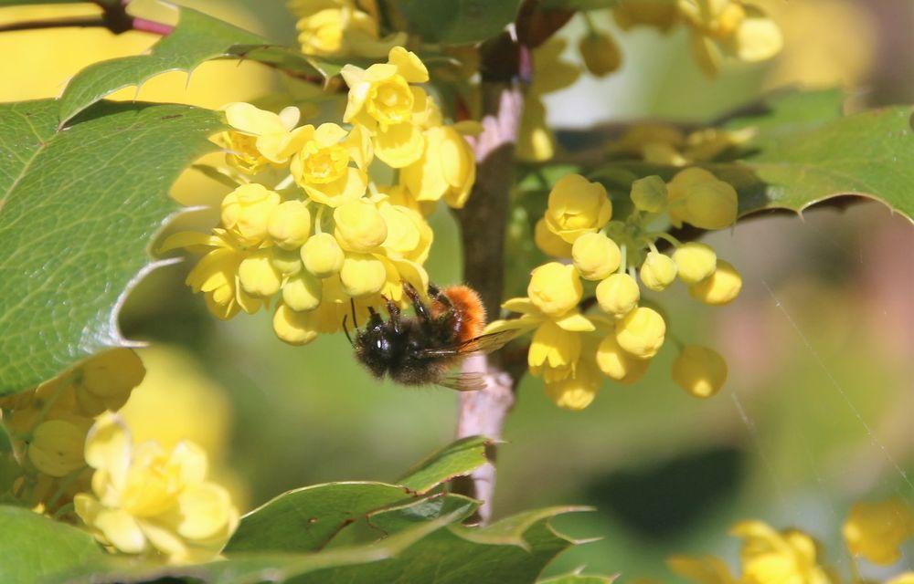 Ce legătură există între Lamborghini și o colonie de 600.000 de albine? - Poza 11